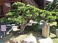 Chi Lin Nunnery 志蓮淨苑 Garden - panoramio (2).jpg