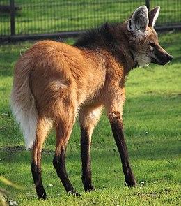 Az állat egy németországi állatkertben