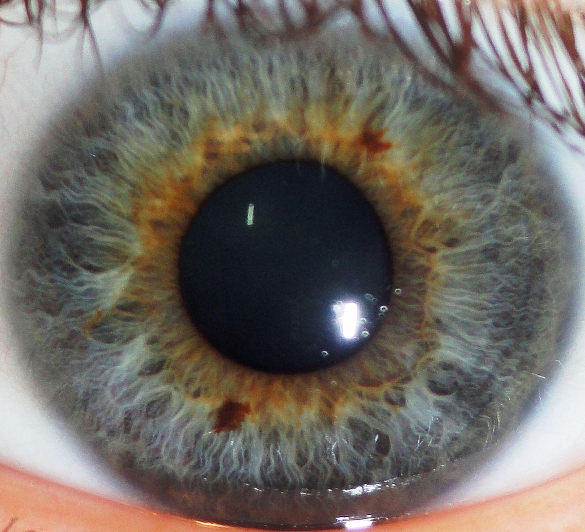 rood doorlopen ogen