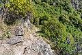 Coastal Cliffs Walkway, Canterbury, New Zealand 22.jpg