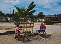 Coconuts (149724665).jpeg