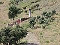 Coll de Banyuls 2011 19.jpg