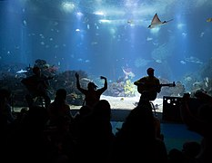 Concert for kids at the Lisbon Oceanarium, Lisbon, Portugal julesvernex2.jpg