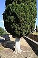 Conjunto Arqueológico de Itálica (32577017470).jpg