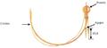 Construcción oficial de la Cordón Acotaciones en milímetros.png