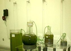 Opiniones de cultivos auxiliares for Que son cultivos asociados