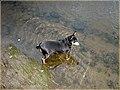 Copine dans la rivière (2006-08-19) - panoramio.jpg
