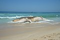 Corpo de baleia encalhada na Praia do Arpoador, no Rio (24568321928).jpg