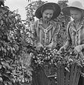 Couple of young women picking hops (5436791110).jpg