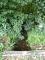 Cours d'eau entre La Rochette et Caradec 02.jpg