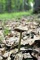 Cranberry Swamp Natural Area (32) (18075616136).jpg