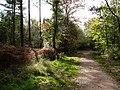 Creech Woods - geograph.org.uk - 1021891.jpg