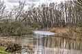 Creek (47062507521).jpg