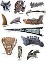 Csehbanya Formation representative fauna.jpg