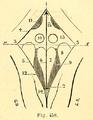 Cuarto ventrículo.png