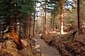 Czerniawa Zdrój - ścieżka rowerowa - panoramio (2).jpg