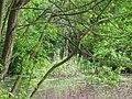 DSC02259 Teich zur Aufzucht autochthoner Fischarten.jpg