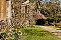 Daffodils - The Lodge (33361640895).jpg