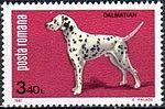 Dalmatian-Dog-Canis-lupus-familiaris Romania 1981.jpg