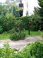 Damaged tree.JPG