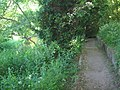 Darenth Valley Path - close to Shoreham - geograph.org.uk - 1333193.jpg