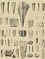 Die Versteinerungen des rheinischen Schichtensystems in Nassau. Mit einer kurzgefassten Geognosie dieses Gebietes und mit steter Berücksichtigung analoger Schichten anderer Lander (1850) (14783839942).jpg