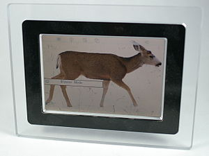 A digital photo frame with a picture. The disp...