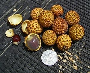 Sapindaceae - Alupag, Dimocarpus didyma  fruits