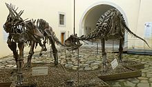 Skeletal casts of Amargasaurus and Carnotaurus
