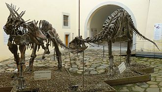Natural History Museum of the University of Pisa - Dinosaur court.