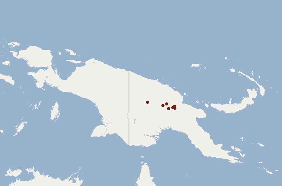 Distribution of Nyctophilus microdon