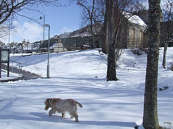English: Dog out for a walk in the snow Dog ou...