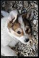 Dogs (5148489436).jpg