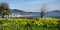 Dojran Lake 228.jpg