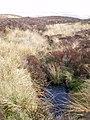 Downstream view of the Nant y Murddun Llwyd - geograph.org.uk - 1266014.jpg