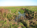 Drainage ditch in Thurlton Marshes - geograph.org.uk - 1578646.jpg