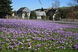 Drebacher Krokuswiesen...IMG 4934BE.jpg