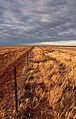 Drought affected paddock on the Hay Plains.jpg