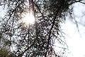Drvenaste biljne vrste, Park Čair, Niš 20.jpg