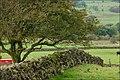 Drystone wall, Slemish (2) - geograph.org.uk - 556270.jpg