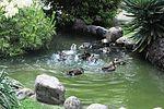 Ducks of Zama 101 130703-A-VH820-247.jpg