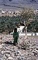 Dunst Oman scan0458 - Wadi Ghul.jpg