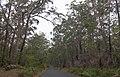 Durras North NSW 2536, Australia - panoramio (1).jpg
