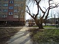 Dzierzoniow, Poland - panoramio - lelekwp (63).jpg
