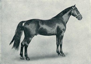 EB1911 Horse - coaching stallion.jpg