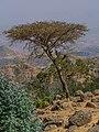 ET Amhara asv2018-02 img007 Wunenia.jpg