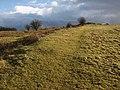 Earthwork, Cothelstone Hill - geograph.org.uk - 1140122.jpg