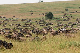 Seven Natural Wonders of Africa - Image: Eastern Serengeti 2012 05 31 2905 (7522629482)