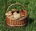 Edible fungi in basket 2020 G2.jpg