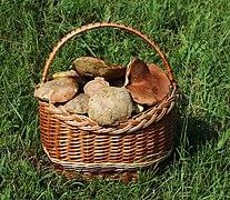Edible fungi in basket 2020 G2.jpg